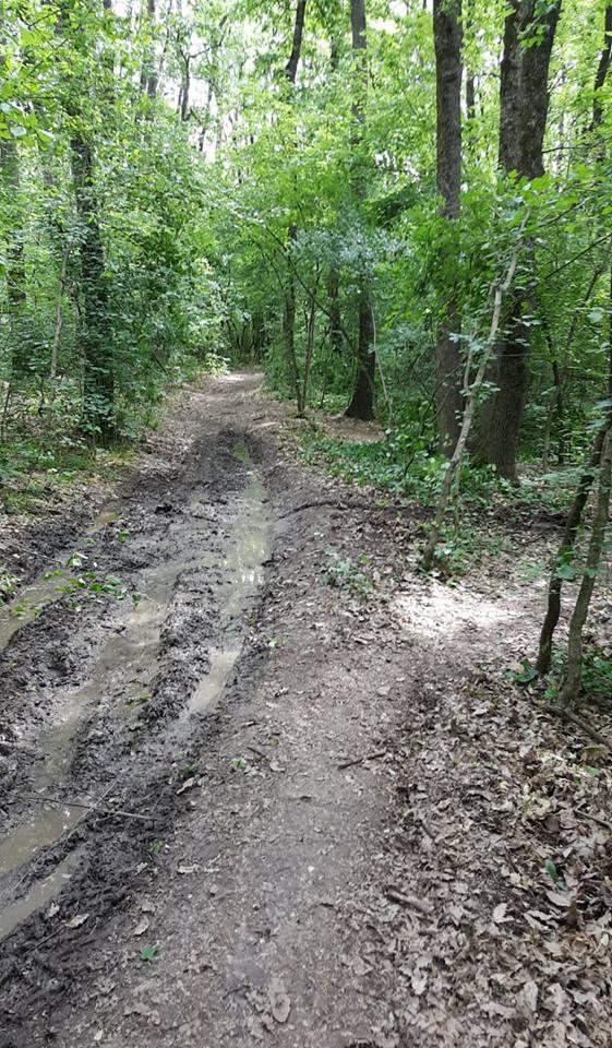 indepartarea copacilor cazuti pe traseuul prima evadare